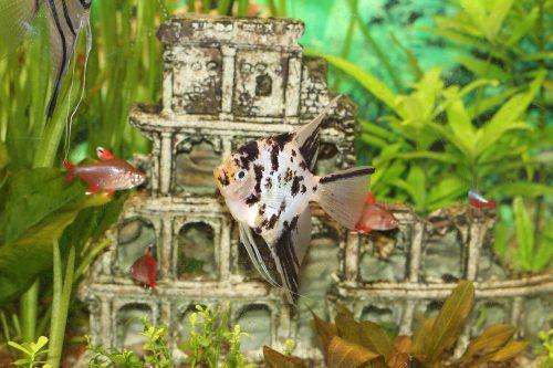 Dr. Hans Peter Gugler Aquarium